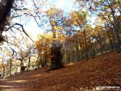 Castañar de El Tiemblo;Ávila; grupo de senderismo parques naturales murcia grupo de montaña madri